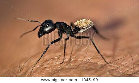 Warrior Termite
