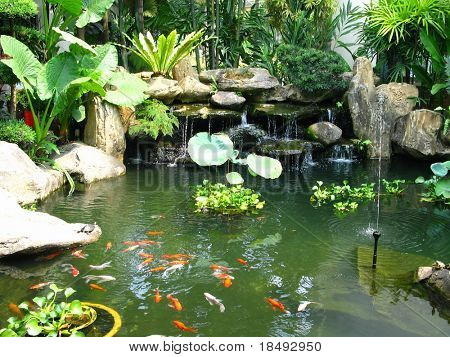Lagoa tropical