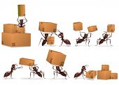 package delivery mail order cardboard box packet send by ants