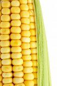 Постер, плакат: свежей кукурузы
