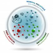 Human Cell And Free Radical, Andtioxidant And Normal Molecules poster