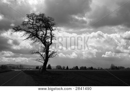 Tree Sillhoette