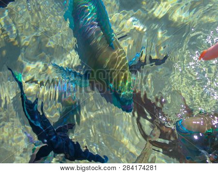 Coral Reef Colorful Fish And