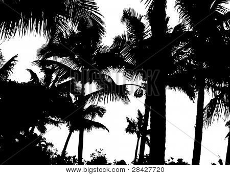 Detailed palm trees isolated on white background