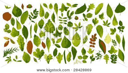 The big collection of leaves