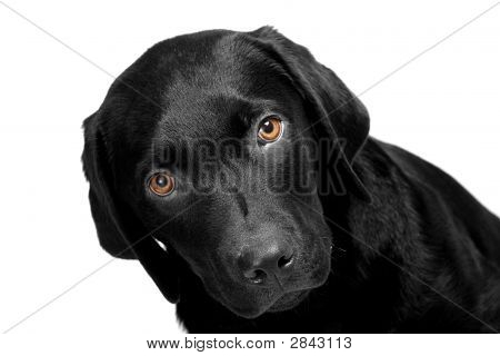 Puppy With Bright Eyes
