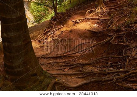Sunlight and tree roots in soil tropical jungle forest