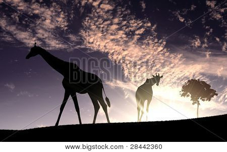 Picture of african animals in savannah at dawn time