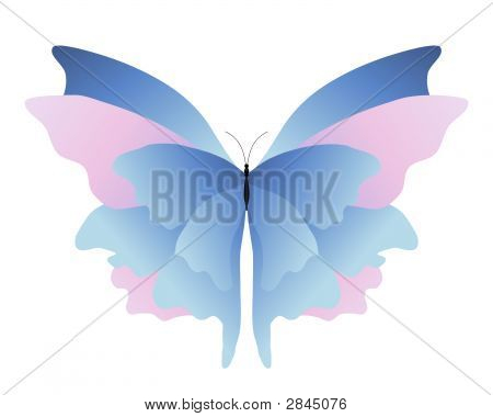 Pink Blue Butterfly