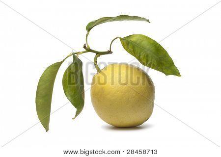 Whole single Citrus Medica fruit on white background