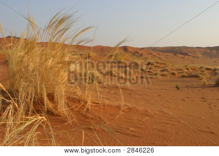 Namibian Desert Vegetation
