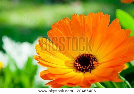 Orange Flower With Nature Light