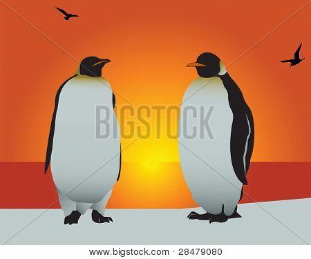 Pingüino. Amor