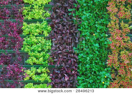 Pattern of Colorful Plants