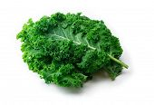 Kale. King of nutrition. A Kale leaf isolated on white. poster