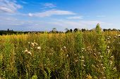 picture of vinnitsa  - Field of grass and cloudy sky near Vinnitsa in Ukraine - JPG