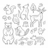 Doodle Forest Animals. Woodland Cute Baby Animal Squirrel Wolf Owl Bear Deer Snail Childrens Sketch  poster