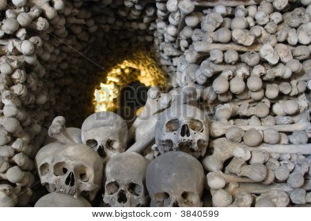 Bone Tunnel