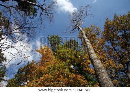 Effigy Mounds Trees