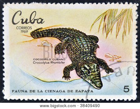 CUBA - CIRCA 1969: A stamp printed in cuba dedicated to fauna of the Zapata swamp shows Cuban crocod