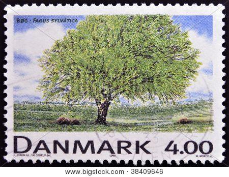 DENMARK - CIRCA 1999: A stamp printed in Denmark shows Fagus sylvatica circa 1999