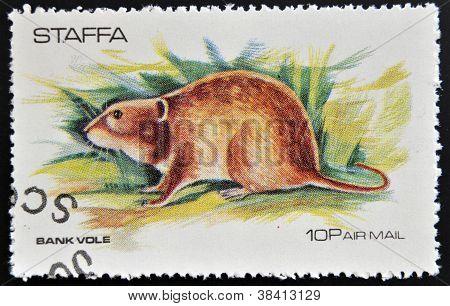 STAFFA - CIRCA 1973: stamp printed in Staffa shows bank vole circa 1973