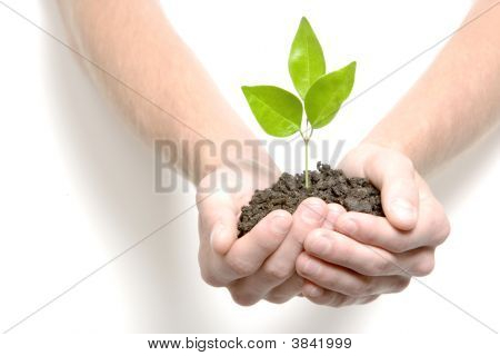 Holding A Small Sprout