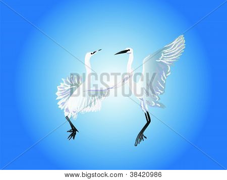 Dance of birds