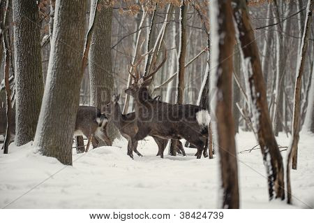Deer In The Frosty Winter Forest