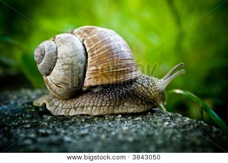Travelling Snail