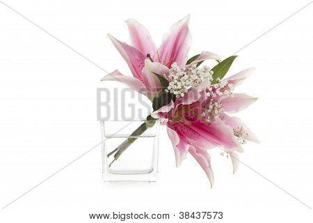 stargazer flowers