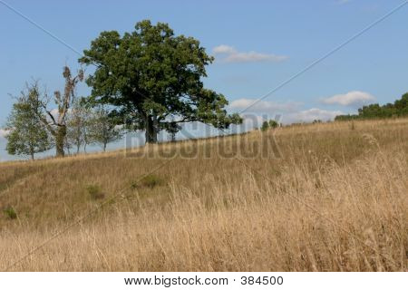 Tree On The Field