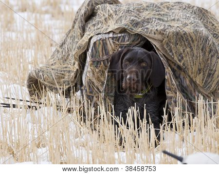 Dog in a blind
