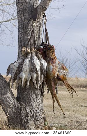 Sharptailed Grouse and Pheasants