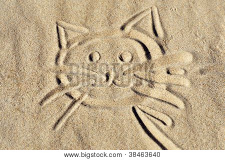Kitten Face On Beach Sand