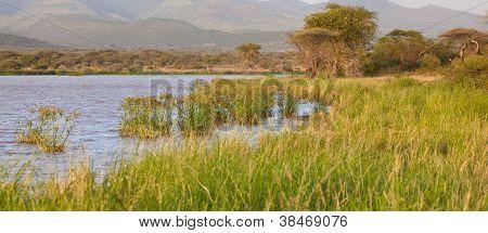 African Marsh