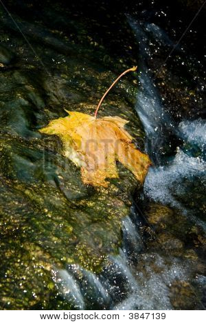Yellow Leaf In Stream