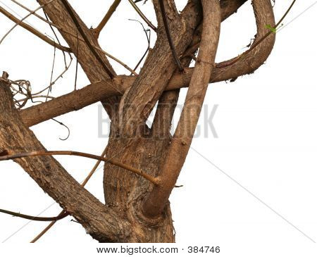 Twisty Branch