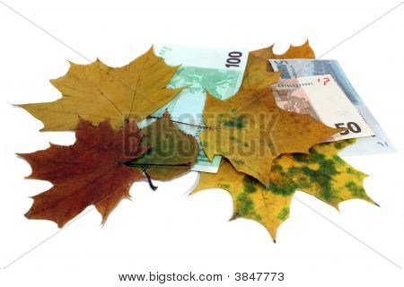 Autumn Leaf Fall Of Euro On A White Background