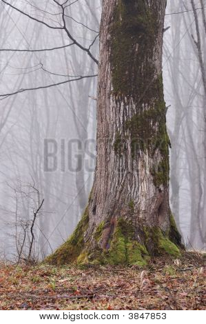 Big Tree Trunk