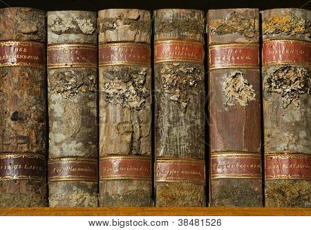 Xylotheca Wooden Books At The Shelf