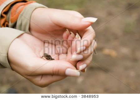 Rana en las manos