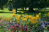 stock photo of swales  - flower bed and lawn after the rain - JPG