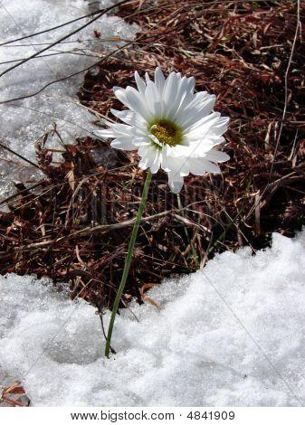 Impatiant Spring