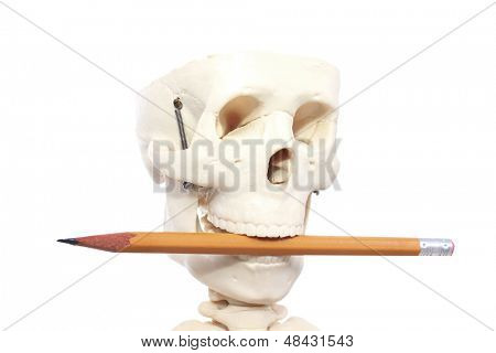 Skull with a puzzled expression
