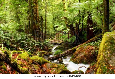 Ancient Rainforest
