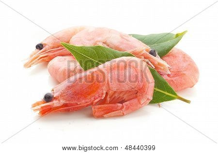 Coldwater Shrimps