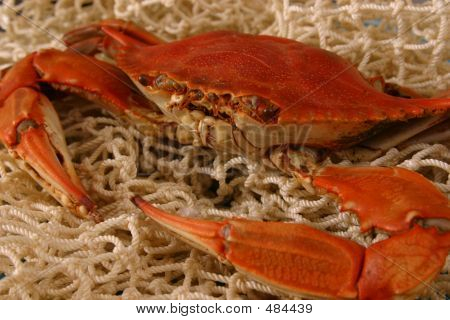 Boiled Crab On Net