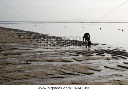 Collector Of Seaweed, Ocean Beach, Outflow, Morning, Indonesia