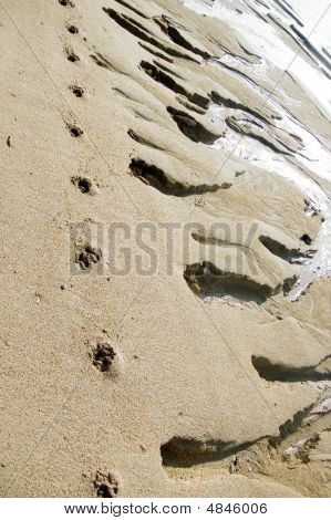 Animal Traces On Coastal Sand